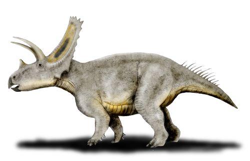 File:Titanoceratops NT.jpg