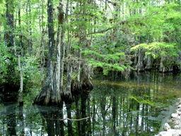 Future Swamp