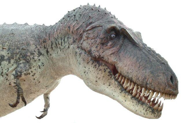 File:Daspletosaurus025.jpg