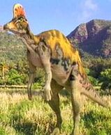 Corythosaurus px
