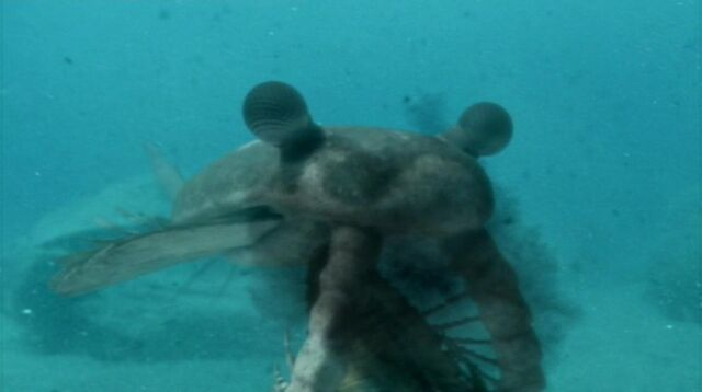 File:814px-Anomalocaris eating trilobite.jpg