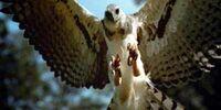 Haast Eagle (PX)