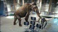 Mammoth kills Future Predator