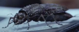 File:Future beetle pic by RaptorSpinoRex.png