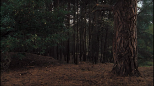3x10cretaceousForest