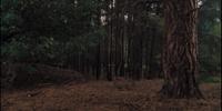 Cretaceous forest