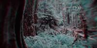 Cenozoic forest