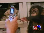 Monkey Business.00015