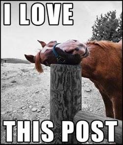 File:Horse-meme.jpg
