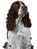 Plik:Dogs.wikia.logo.png