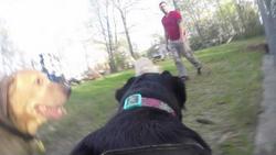 GoPro Fetch Test