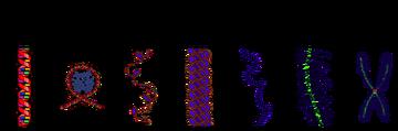 Chromatin Structures