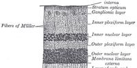 Photosensitive ganglion cell