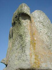 Lichenes rock Meneham ecological niches dscn1884