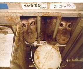 File:Monkey5.jpg