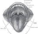 Fungiform papillae