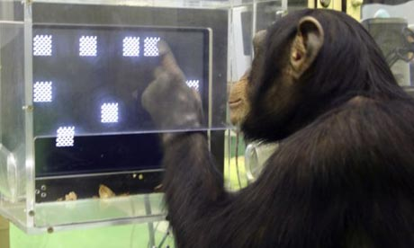 File:Chimpanzee Spatial Working Memory Test.jpg
