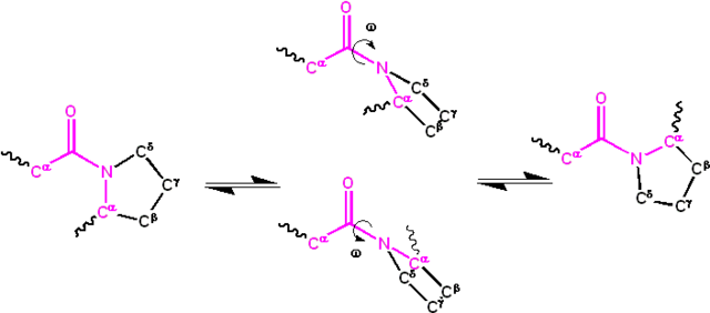 File:Cis trans isomerization kinetics X Pro peptide bonds.png