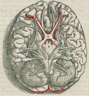 1543,Vesalius'Fabrica,VisualSystem,V1