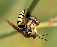 File:Wasp August 2007-23.jpg