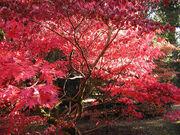 Autumn.westonbirt.750pix