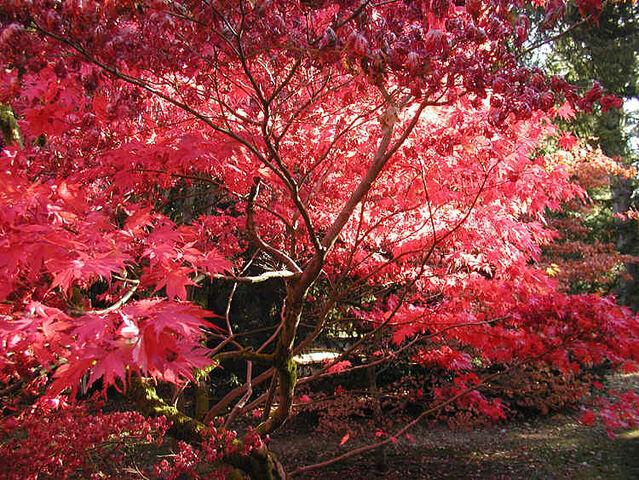 File:Autumn.westonbirt.750pix.jpg