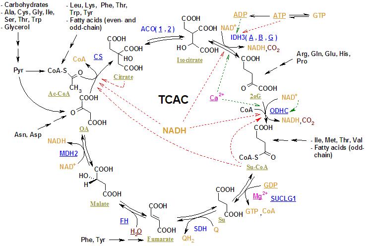 TCA reactions