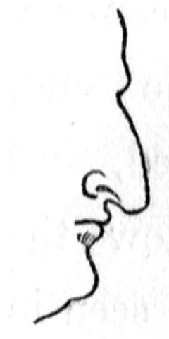 File:Class IV nose.jpg