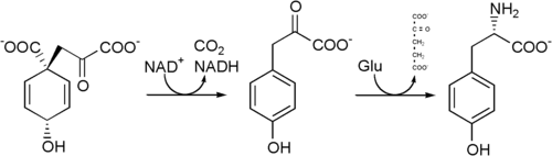 Tyrosine biosynthesis