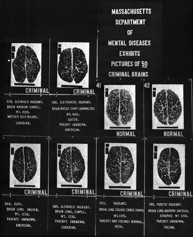 File:Criminal brains.jpg