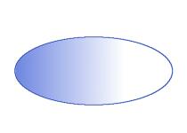 Bicoid gradient