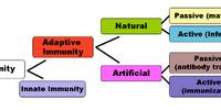 Immunity (medical)