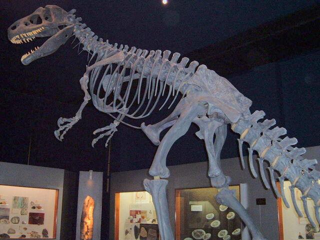 File:Allosaurus1.jpg