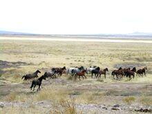 Mustang Utah 2005 2