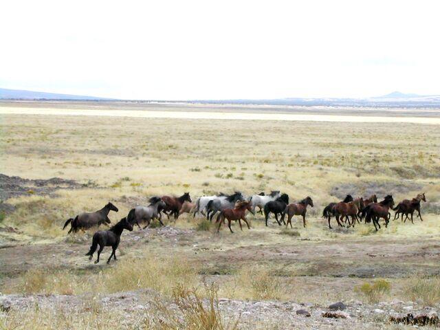 File:Mustang Utah 2005 2.jpg