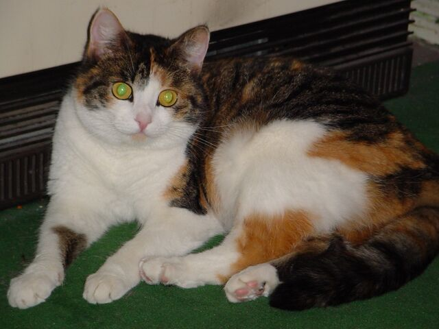 File:Green-eyed cat.jpg