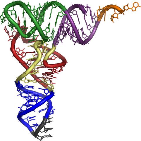 File:3d tRNA.png