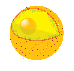 File:Diagram human cell nucleus no text.png