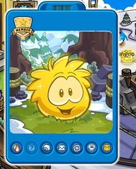 Gold-puffle-1