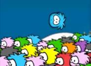Orange Puffle Spotted