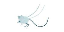 Mutant Mouse