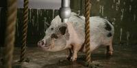 Pigby