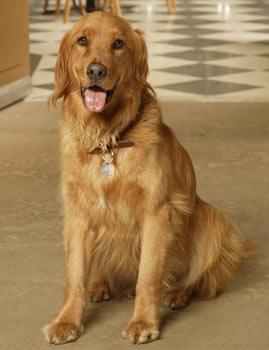 File:Orbit the dog.jpg
