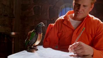Pigeon 504