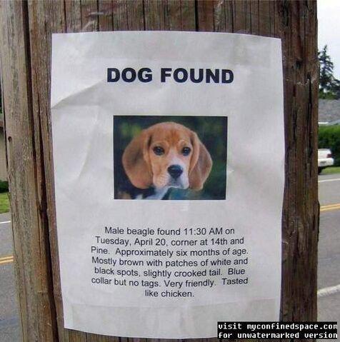 File:Dogfoundyc3.jpg