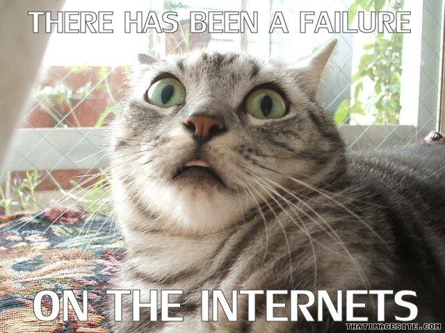 File:Cat1 image.jpg