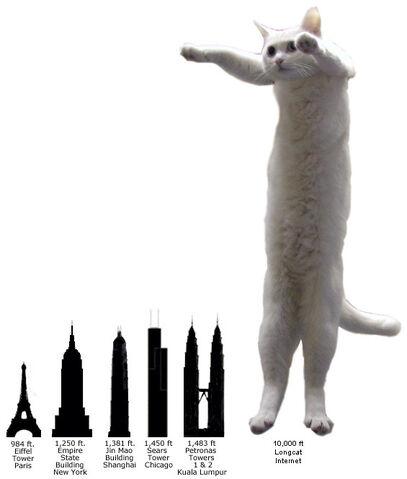 File:Longcat Comparison.jpg