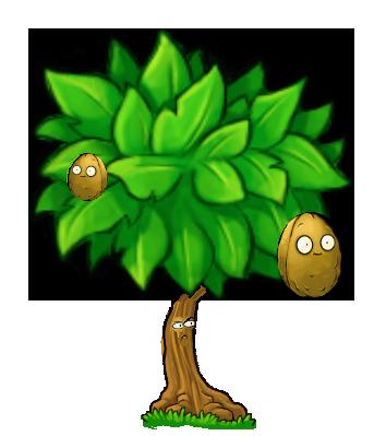 Wall-nut Tree