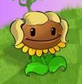 Planatar Sunflower