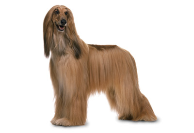 File:Miss Hound.png